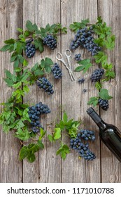 Blue grapes bunches with plant leaves, bottle of red wine and scissors for grapes. Top view, close up on wooden vintage background