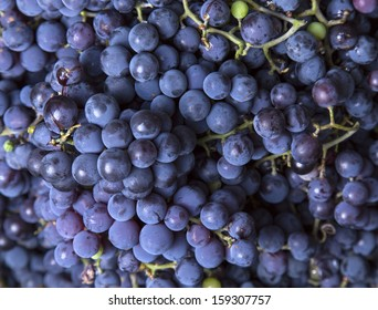 blue grapes close-up as background
