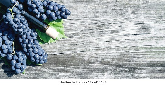 Blue grapes with leaves on an old rough wooden background, top view, copy space