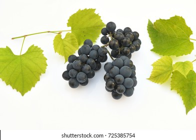blue grapes with leaves on a white background
