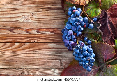 blue grapes on a old wooden table