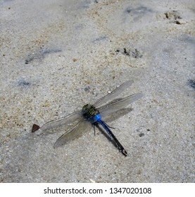 blue and green dragonfly resting on the sand