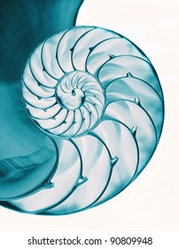Blue green inside of nautilus shell on white