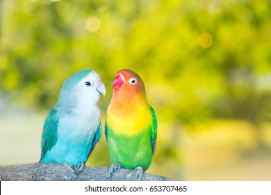 Blue and green Lovebird parrots sitting together on a tree branch at sunset.Blurred green natural background,Sustainable Love Concept And lovers forever