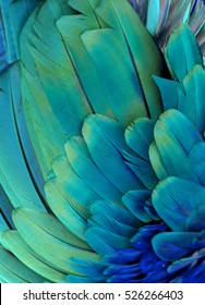 Blue and green macaw feathers
