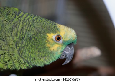 Parrot Human Stock Photos, Images & Photography | Shutterstock