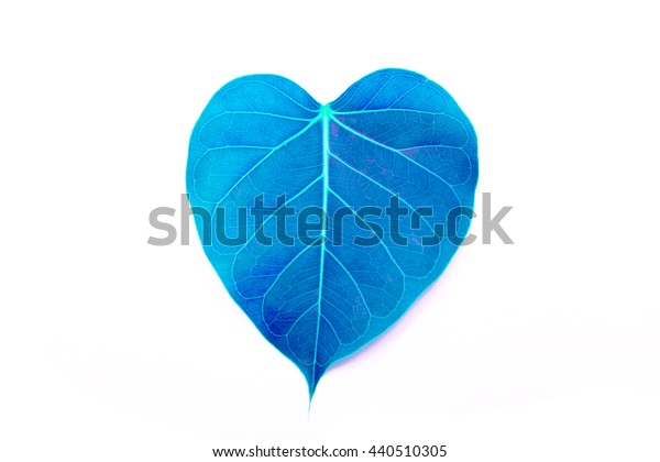 blue heart leaf isolated on white background