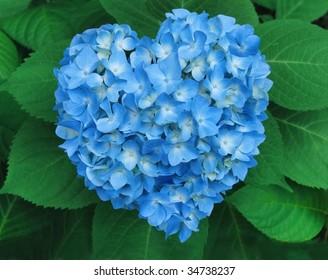 Blue Heart: a vivid blue hydrangea cluster shaped like a heart