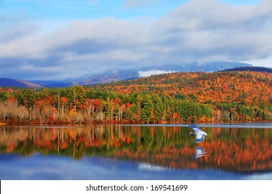 Blue heron fishing and Autumn colors of White Mountains in New Hampshire