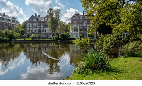 A Blue Heron takes of at a pond in the city park Vondelpark in Amsterdam center, the Netherlands