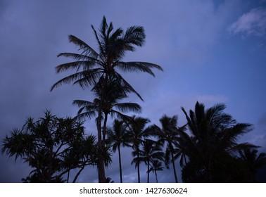 Blue Hour Palm Trees On Kauai