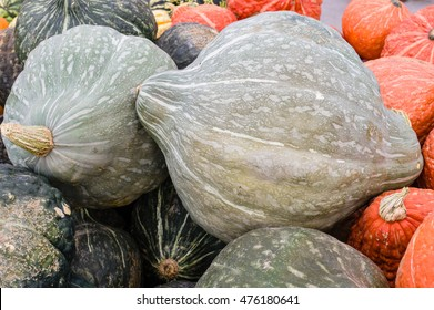 Blue hubbard winter squash at the farmers market