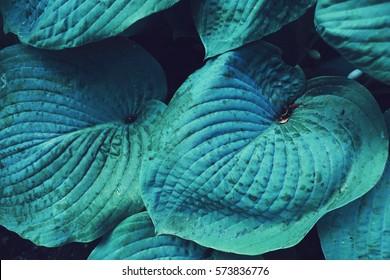 blue blue huge leaf plant close up photo