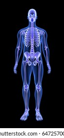 Blue Human Anatomy Body and Skeleton 3D Scan render on black background