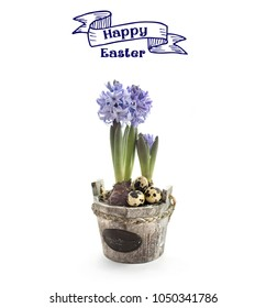 Blue Hyacinth Easter concept
