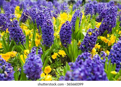Blue hyacinths on a bed of autumn floral background