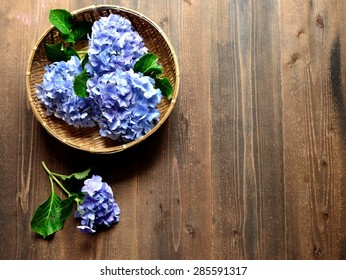 Blue hydrangea in the bamboo basket.Image of early summer flower in Japan.