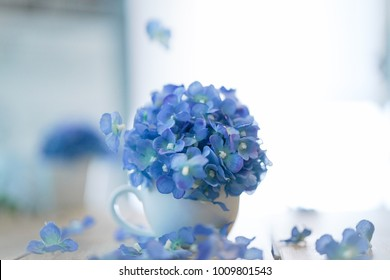 Blue Hydrangea in white Ceramic Vase and fallen on the wooden table
