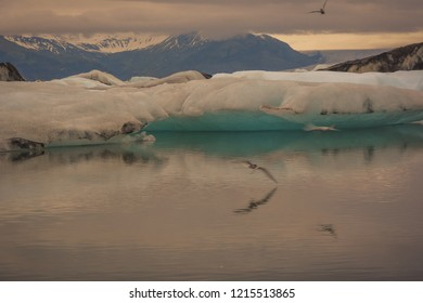 Blue icebergs floating in Jokulsarlon glacial, Iceland in summer at dusk with reflections in the water and birds flying in motion blur. A bit of grain.