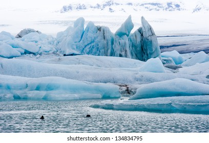 Blue icebergs floating in the jokulsarlon lagoon in Iceland in the winter with two seals swimming on the foreground