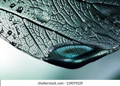 blue leaf with droplet