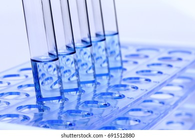 Blue Liquid in Glass Tube Lab Test tools on plastic stand holder, group of five, Studio lighting white background isolated