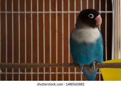 Blue lovebird perched on a wooden log