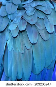 Blue Macaw Feather Background