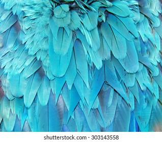 Blue Macaw feather texture background