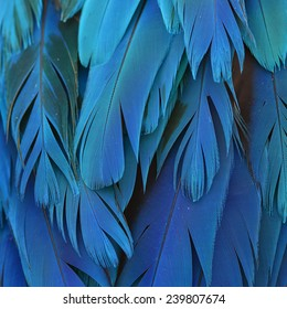 Blue Macaw feathers, colorful background texture
