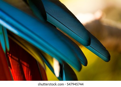 Blue Macaw Feathers in Detail