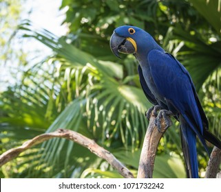blue macaw poses for your picture