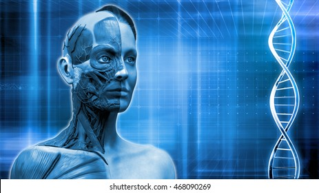 Blue medical background dna  , Human anatomy model  of a female in realistic 3D rendering