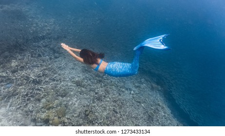 Blue mermaid dives with a school of fish in a shallow reef