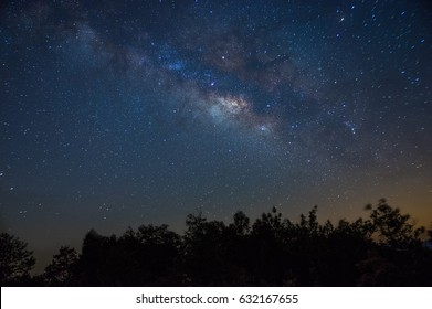 Blue Milky Way over the forest