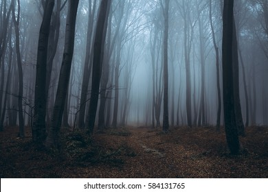 Blue misty forest