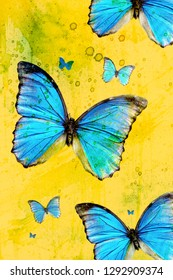 Blue morpho butterfly - some emperor isolated on yellow background