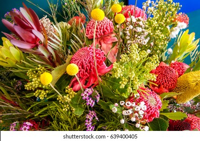 Blue Mountains, Australia -September 21, 2015: Australian native flowers in a stunning visual display at the Waratah Festival in the Blue Mountains at Mount Tomah Botanic garden.