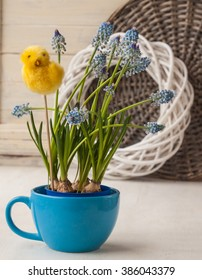Blue muscari in  cup  with  decorative sticker chicken on the window