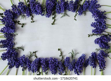 Blue Muscari, laid out in rows on a white background, place for the inscription