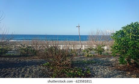 Blue ocean behind a wild garden