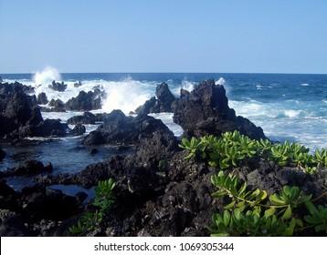 Blue ocean waves crashing on black lava rocks with naupaka plants on the shore in Hawaii.