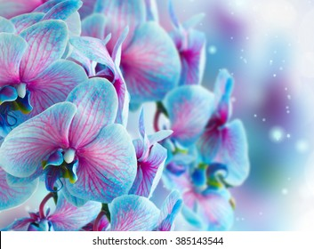 blue  orchid branch on gray bokeh background