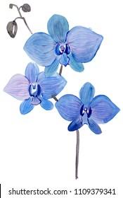 Blue Orchid flower. Watercolor floral illustration. Floral decorative element.