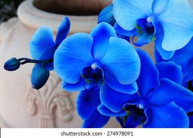 Blue orchid on a ceramic vase background
