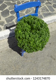 Blue Painted Wooden Chair With A Lush Greek Basil Flowerpot Decoration Sitting On Top Of It On A Sunny Summer Day.