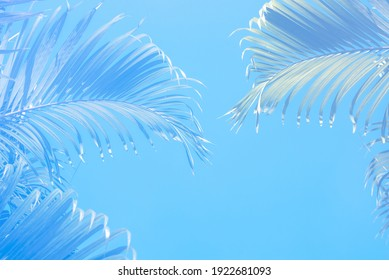 Blue Palm leaf on a soft blue background, copy space