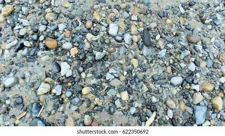 Blue Pebbles in Shingle