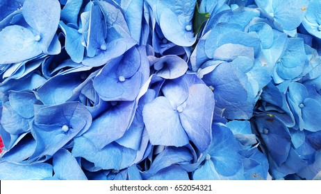 blue petals of in a group of flowers