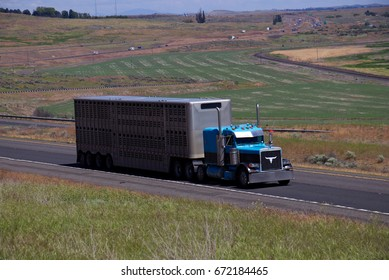 A blue Peterbilt Semi pulls a cattle trailer down an Oregon Highway. June 20th, 2017 Oregon, USA